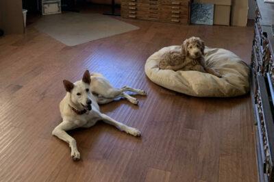 Rick Paulus's studio dogs